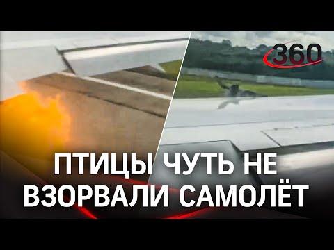 Видео: самолёт столкнулся с птицами. Рейс Варадеро – Москва вернулся обратно
