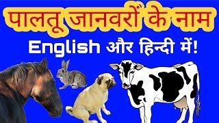 पालतू जानवरों के नाम इंग्लिश और हिन्दी में|Pet's name in English and Hindi|