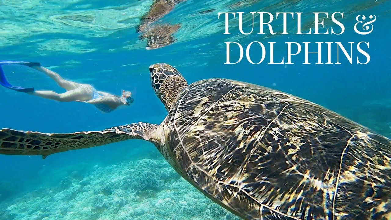 SWIMMING WITH SEA TURTLES | APO ISLAND PHILIPPINES 1