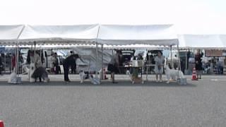 H25年9月22日(日) 鳥取県クラブ連合会展のJKCドッグショーに ...