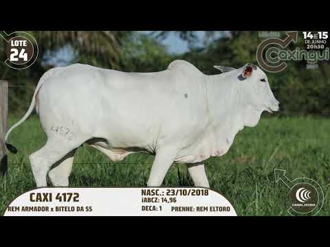 LOTE 24   CAXI 4172