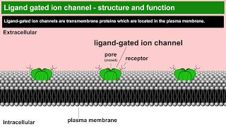 Ligand gated ion channels structure and function