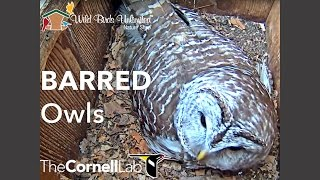 Wild Birds Unlimited Barred Owl Cam