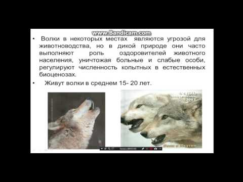 Презентация Пословицы и Поговоркииз YouTube · Длительность: 3 мин32 с