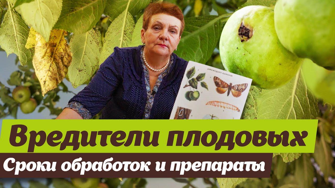 Как бороться с вредителями плодовых.  Советы опытного садовода