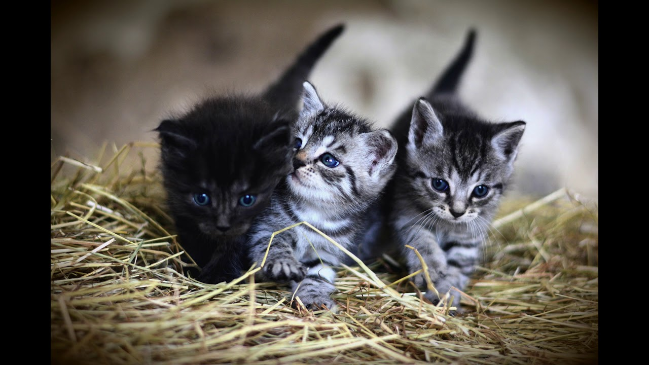 صوت قطة صغيرة تنادي امها Youtube