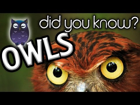 Five Interesting Owl Facts