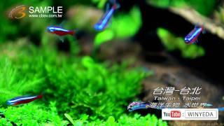 Full HD 美的因  水世界 水族箱 海洋生物 小魚  魚 (4) ky0208