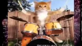 кошки поют с новым годом топ