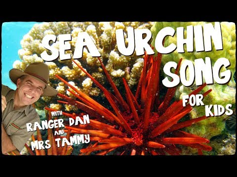 SEA URCHIN SONG FOR KIDS | Creation Connection | Ranger Dan and Mrs Tammy | Animal Songs