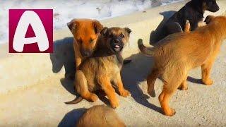 Влоги #ЩЕНКИ #Смешные собаки Идем кормить собачек #ВИДЕО про ЖИВОТНЫХ для детей #Алиса