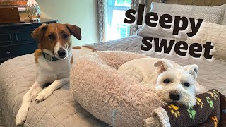 MY DOGS SWEETEST NIGHTTIME ROUTINE ~ POLLUX + MAXXIE SLEEPY BEDTIME