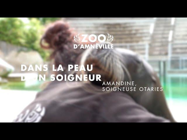 Découverte | Amandine, responsable otaries