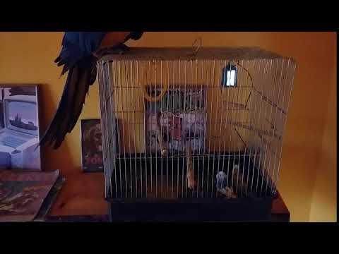 Papagájfajok találkozása