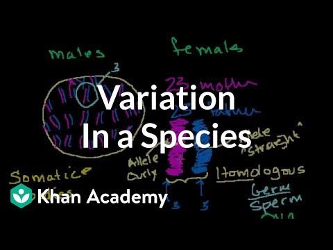 Variation in a Species
