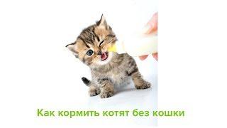 Как кормить котят без кошки. Ветеринарная клиника Био-Вет.