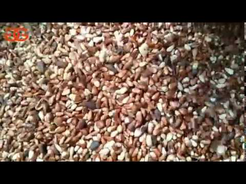 Pine Nut Cracking And Shelling Machine