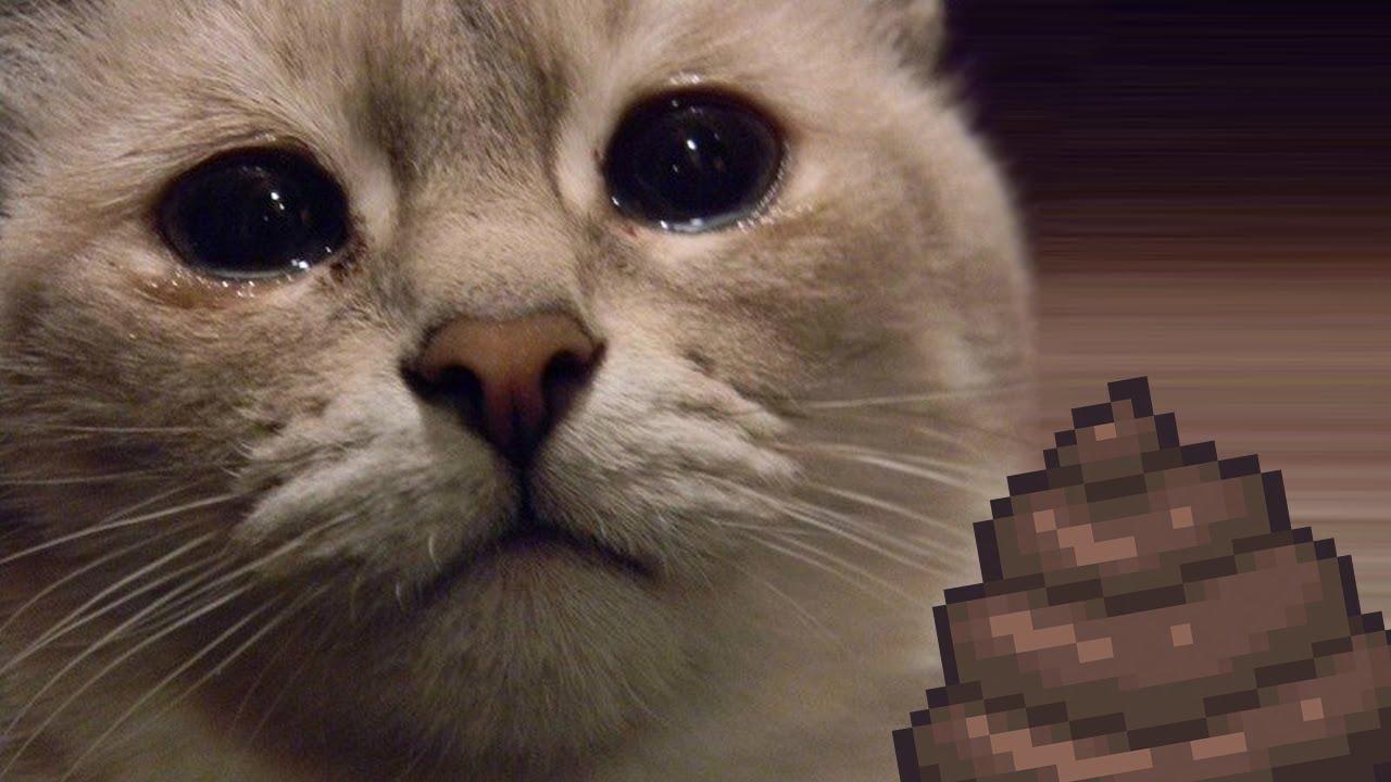 его имя картинки с плачущим котом говорить слово нет практически