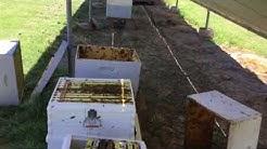 Beekeeping in Arizona