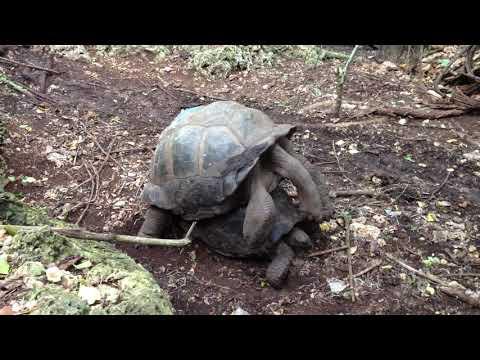 Секс черепах видео