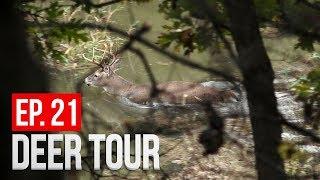 Buck SWIMMING Across River, MORE Close Calls - DEER TOUR E21