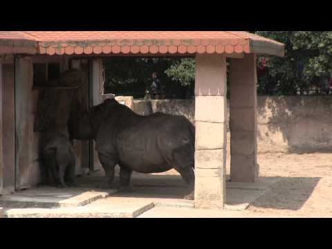 La Palmyre le Zoo