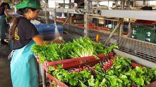 Future farmers formed through MAO Organic Farms-UH partnership