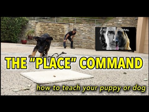 Puppy Training - The PLACE Command in Dog Training - Puppy & Dog Training Video