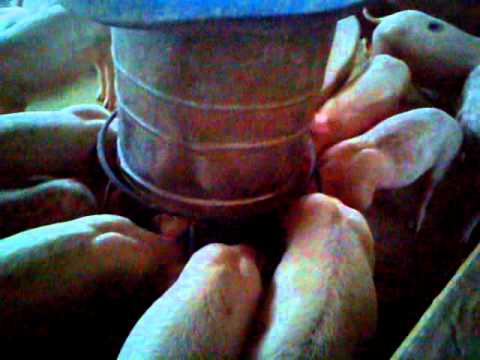 Feed Plus : Microorganism Fermented Feed Improves Farming Economic