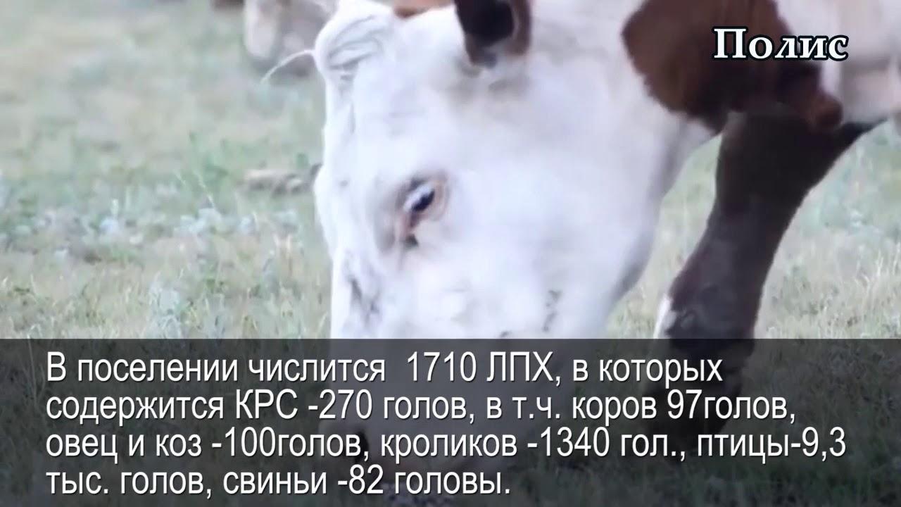 Новоукраинка