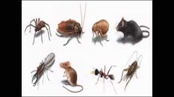 Exterminator in Brooklyn NY Pest Control Bed Bug Treatment