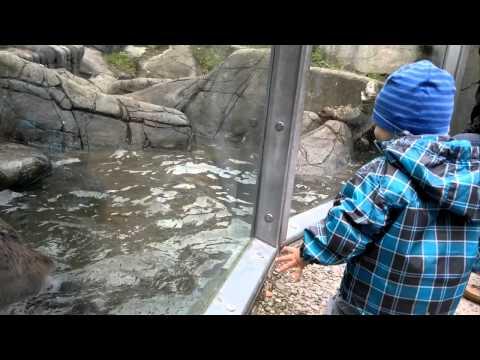 Oakley @ Skansen zoo Stockholm