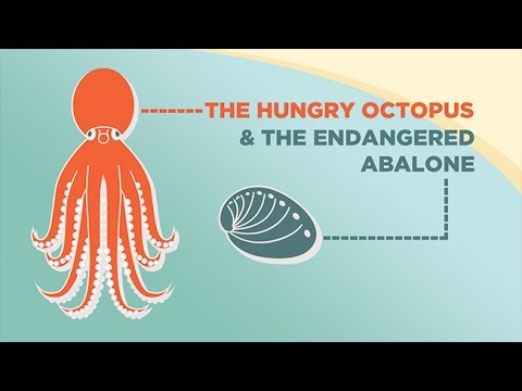The Hungry Octopus and the Endangered Abalone
