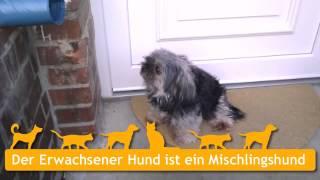 Mischlingshunde In Liebenburg