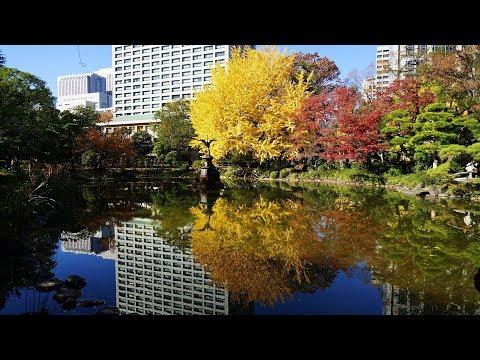 2019 東京 日比谷公園 紅葉