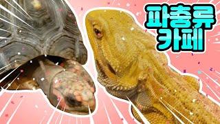 파충류카페에 다녀왔어요feat 턱수염도마뱀 육지거북이 …