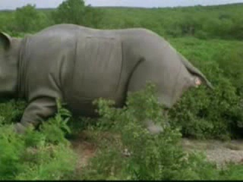 ace ventura rhino
