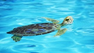 Florida Travel: Visit a Working Sea Turtle Hospital in the Florida Keys