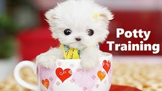 How To Potty Train Teacup Puppies - Teacup Puppy House Training Tips - Housebreaking Teacup Puppies