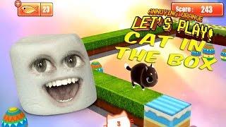Marshmallow spielt die Katze in der Box!