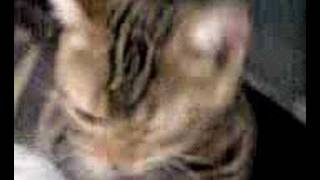 池乃めだかばりに舐め舐めしている屑千代。 http://kuzuchiyo.com/