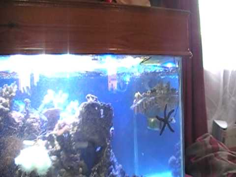 Wave maker marine aquarium youtube for Fish tank wave maker