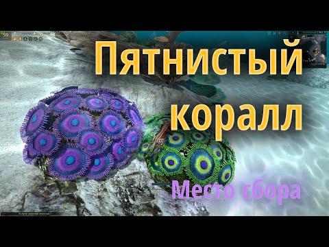 Где найти Разноцветные кусочки кораллов для квеста «Лакомство для молодых выдр»