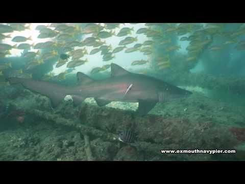 Exmouth Navy Pier Underwater DVD | Ningaloo Reef