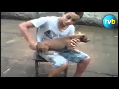 ESSAYEZ DE NE PAS RIRE ! - Vidéo Drôle Insolite Humour et Buzz News HD 。 ‿ 。Mort De Rire Top ...