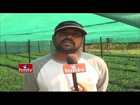 Software Employee Success In 'Apple Ber' Farming By Cloning Method | Nela Talli | HMTV
