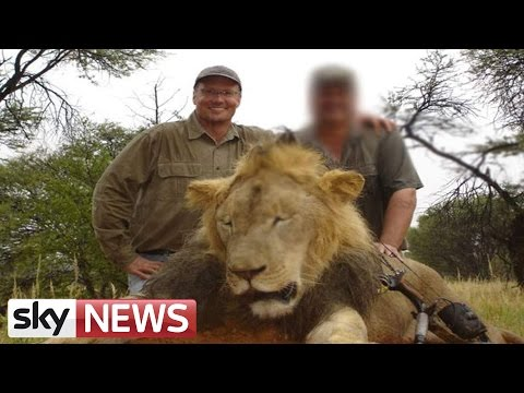 Cecil The Lion: Neighbours Of Lion-Killing Dentist React