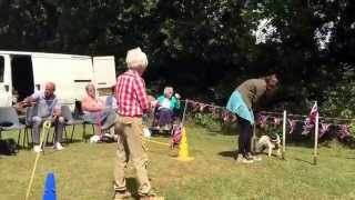 Henry At The Pug Dog Welfare & Rescue Association Agility Course