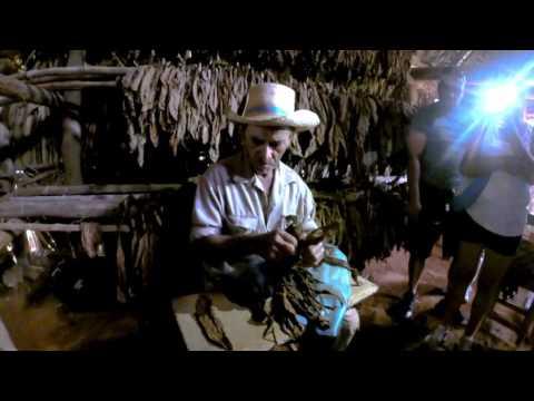Rolling a Cuban Cigar