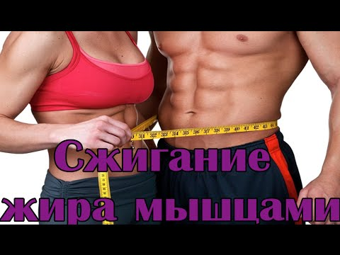 Препараты для сжигания жира на животе у мужчин